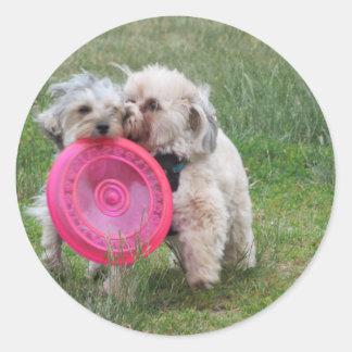 Dois morkies com uma etiqueta do frisbee
