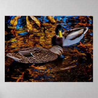 Dois patos no impressão do poster da arte da foto
