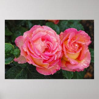 Dois rosas cor-de-rosa cobertos com o poster do im pôster