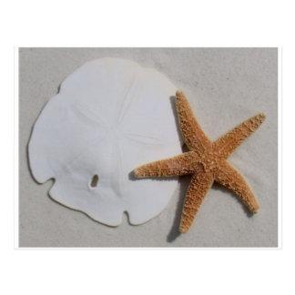 Dólar de areia e cartão da estrela do mar