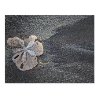 Dólar de areia na areia cartão postal