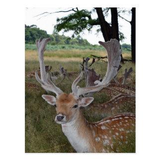 Dos cervos cartão próximo acima