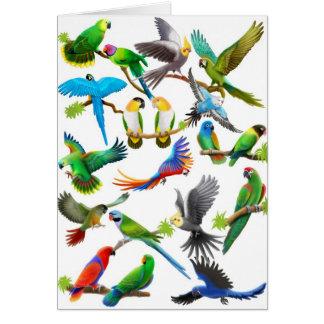 Dos papagaios cartão abundante