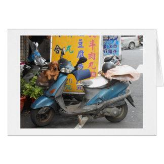 Doxie no cartão da cesta