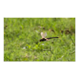 Dragão de vôo impressão de foto
