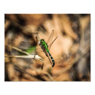 Dragão verde impressão de foto
