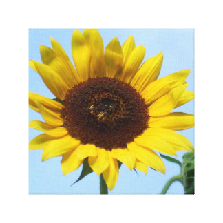 Duas abelhas do mel em um girassol amarelo impressão de canvas envolvida