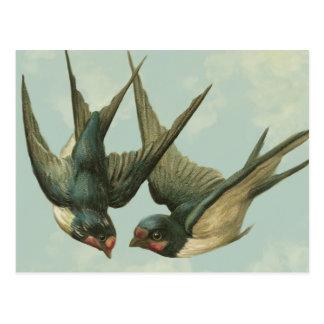 Duas andorinhas do vintage cartão postal