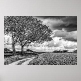 Duas árvores B+Impressão do poster da arte da foto