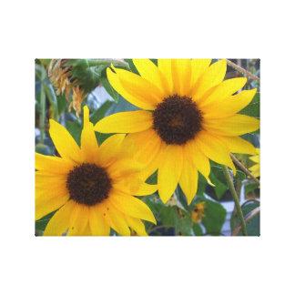 Duas flores amarelas ensolaradas do girassol impressão de canvas envolvidas