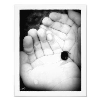 Duas mãos para o caranguejo de eremita impressão de foto