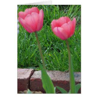 Duas tulipas cor-de-rosa, primavera cartão comemorativo