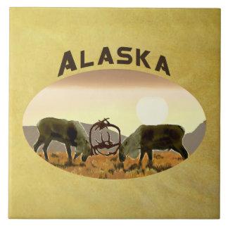 Duelo do caribu - Alaska