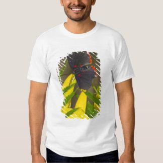 duende Vermelho-limitado na escova de Esperanza T-shirts