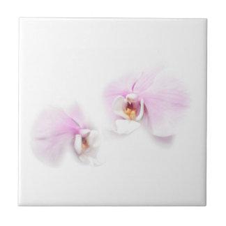 Duo da flor do bordo de Hilo do Phalaenopsis