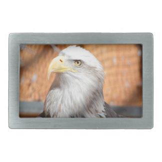 Eagle no deus que nós confiamos