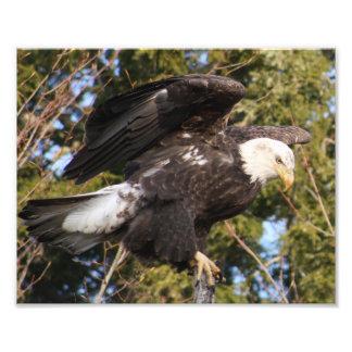 Eagle um fotografia