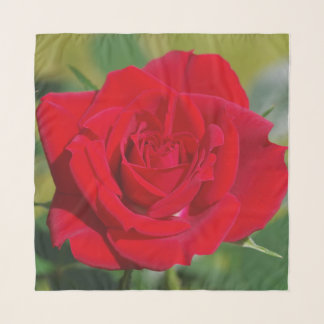 Echarpe Rosa vermelha