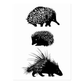 Echidna, ouriço, cartão do porco-