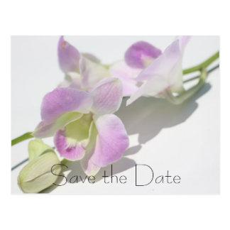 Economias da foto da orquídea o cartão da data cartão postal