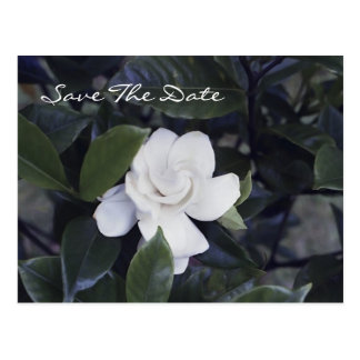 Economias Enchanting do Gardenia o cartão da data