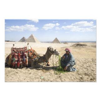 Egipto, Giza. O homem nativo alimenta seu camelo d Impressão Fotográfica