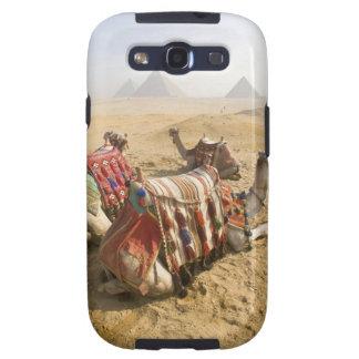 Egipto, o Cairo. Olhar de descanso dos camelos atr Capa Personalizadas Samsung Galaxy S3