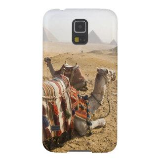 Egipto, o Cairo. Olhar de descanso dos camelos atr Capa Para Galaxy S5