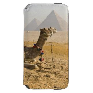 Egipto, o Cairo. Um camelo solitário olha através