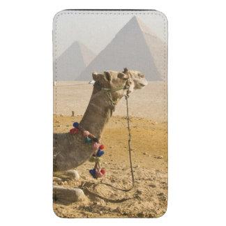 Egipto, o Cairo. Um camelo solitário olha através  Bolsinha Para Celular