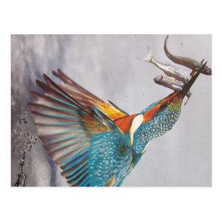 Eisvogel- cartão postal