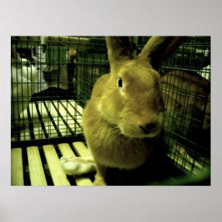 Electro coelho impressão