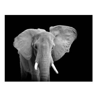 Elefante africano no preto - cartão