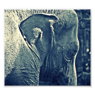 Elefante Foto Artes