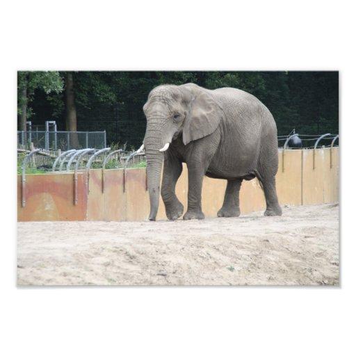 Elefante Fotografias