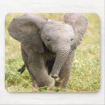 Elefante bebé mousepad