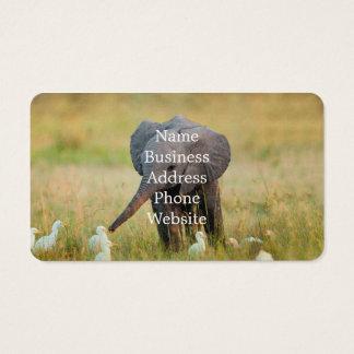 Elefante e pássaros do bebê cartão de visitas