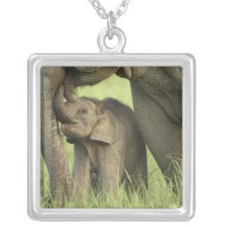 Elefante indiano/asiático e jovens um, Corbett 2 Colar Banhado A Prata