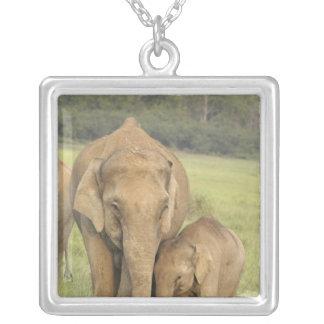 Elefante indiano/asiático e jovens um, Corbett Colar Com Pendente Quadrado