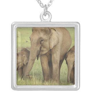 Elefante indiano/asiático e jovens uns, Corbett Colar Com Pendente Quadrado