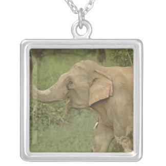 Elefante indiano/asiático que comunica-se, Corbett Colar Com Pendente Quadrado