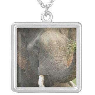 Elefante indiano/asiático que indica a comida, colar com pendente quadrado
