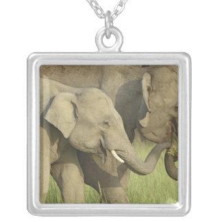Elefante indiano/asiático que pede a comida; colar com pendente quadrado