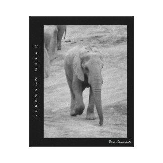 Elefante novo na lona da galeria pelo savana da impressão em tela