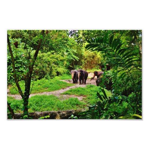 Elefantes Impressão Fotográfica