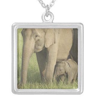 Elefantes indianos/asiáticos e jovens um, Corbett Colar Com Pendente Quadrado