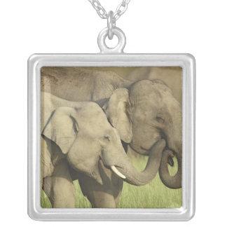 Elefantes indianos/asiáticos que compartilham da colar banhado a prata