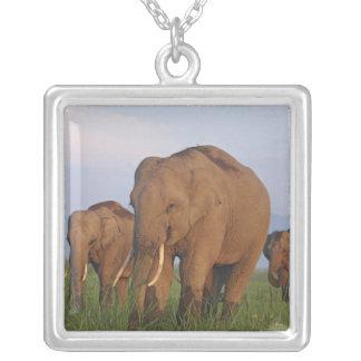 Elefantes indianos na pastagem, Corbett Colar Com Pendente Quadrado