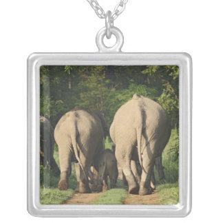 Elefantes indianos na trilha da selva, Corbett Pingente