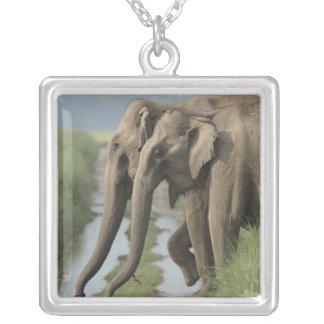 Elefantes indianos que cruzam a trilha, Corbett Colar Com Pendente Quadrado